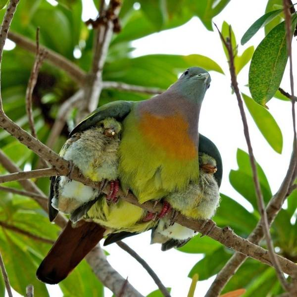 mama bird with babies