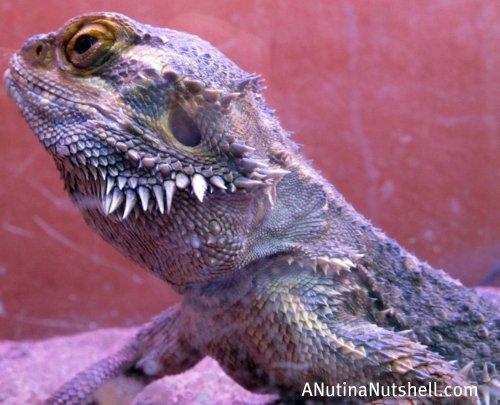 Neuseway nature center reptiles