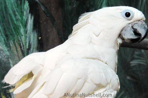Neuseway Nature Center parrot