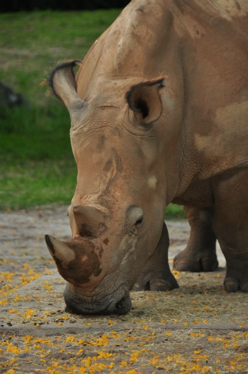 WildAfricaTrek-rhino