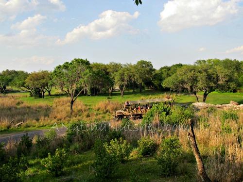 WildAfricaTrek-safari