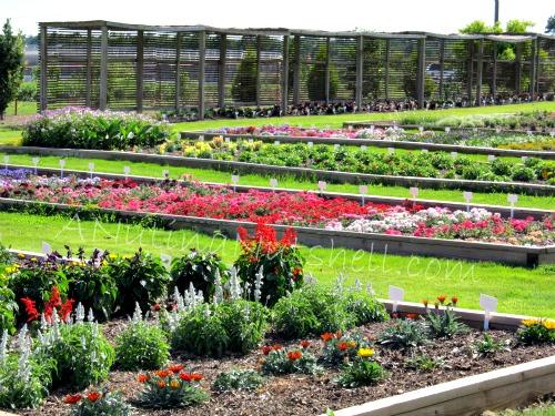 JC Arboretum Annual Color Trials