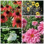JC Raulston arboretum-collage