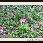 baby deer hiding