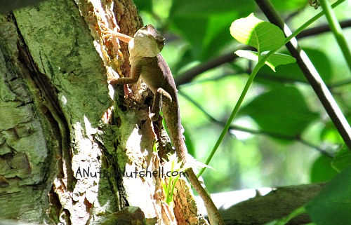 lizard-in-tree
