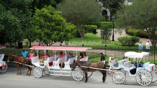 Jackson Square carriage rides