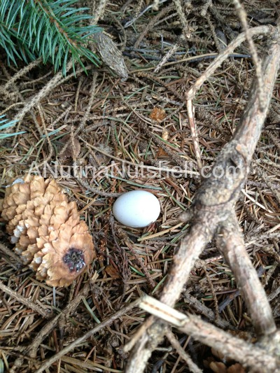 geocaching bird egg