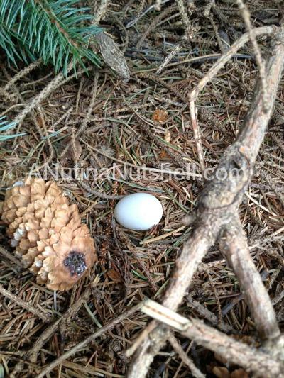 geocaching bird egg