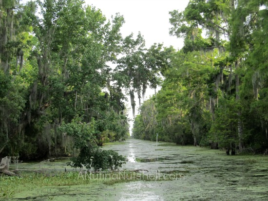 Airboat Adventures - swamp ride - New Orleans