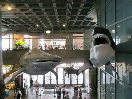 Aquarium of the Americas - New Orleans
