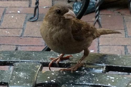Cafe Beignet bird