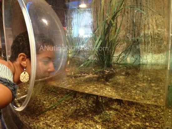 DD - alligator Nola insectarium
