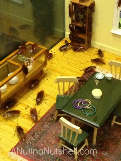 Insectarium - cockroaches