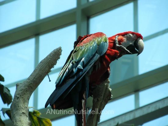 New Orleans Aquarium parrot
