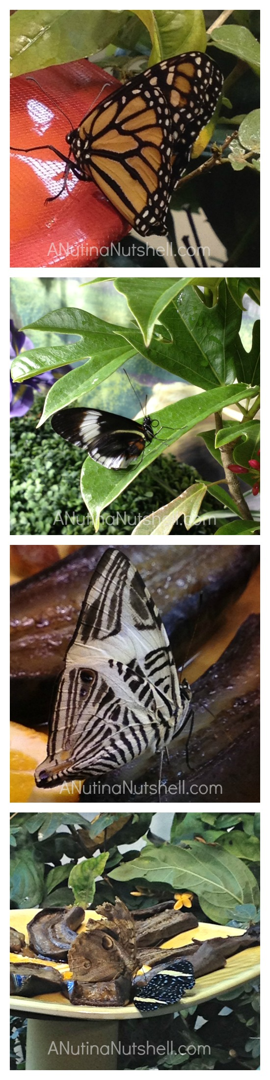New Orleans Audubon Butterfly Gardens - insectarium