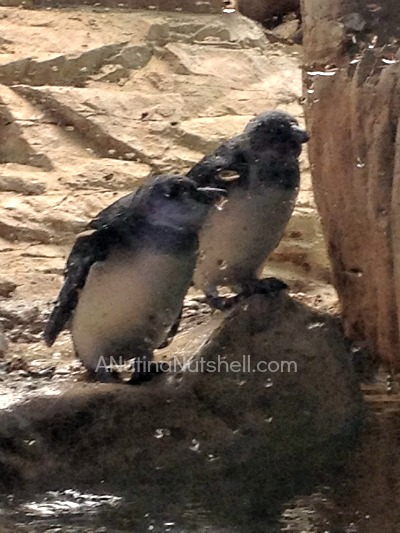 New Orleans aquarium penguins