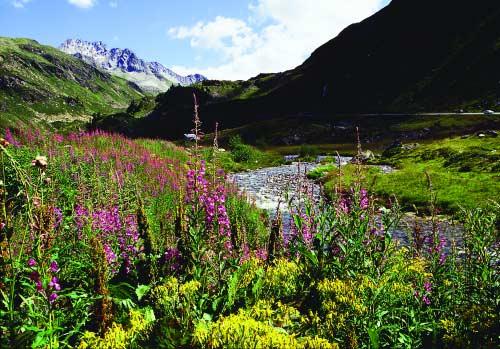 Landscape-Swiss Mountains-Ricola