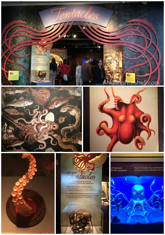 Tentacles exhibit - Monterey Bay Aquarium