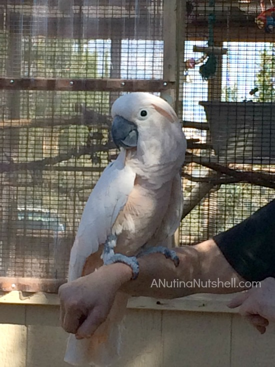 Best Friends Animal Sanctuary - Parrot Garden 2