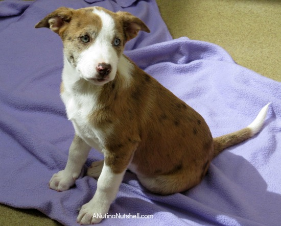 Best Friends Animal Sanctuary - puppy 3