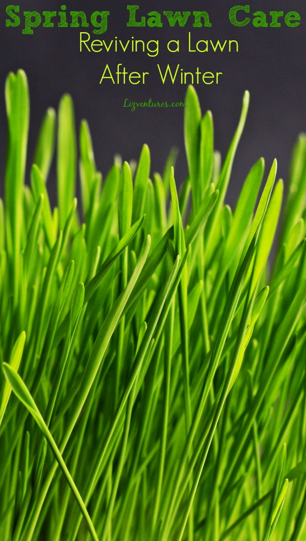 Spring Lawn Care   Reviving A Lawn After Winter
