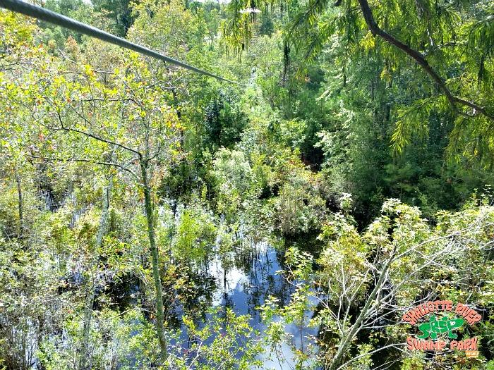 nature - Shallotte River Swamp Park zipline canopy tour