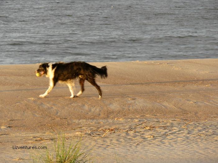 pet-friendly beaches - Brunswick Islands