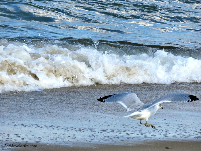 sea bird at beach - Sanderling Resort