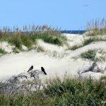 Pea Island National Wildlife Refuge – A Hidden Gem of the OBX!