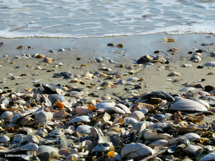 shells at Pea Island National Wildlife Refuge