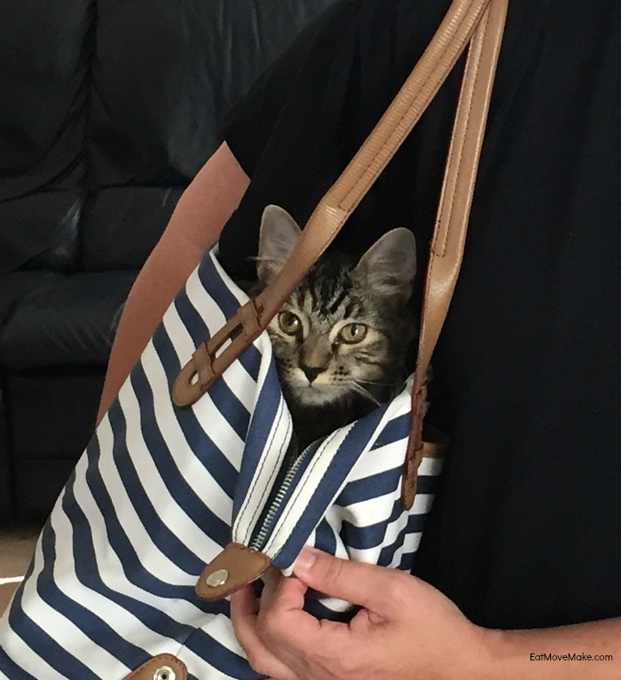 Pinot in purse