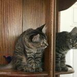 The (Not So) Secret Life of My Kitten