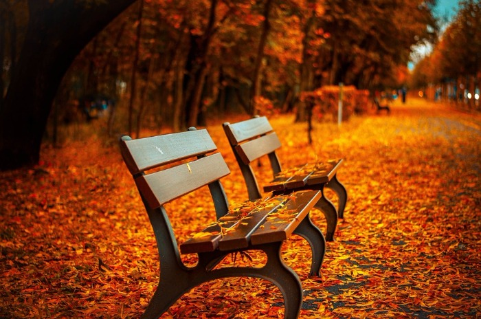 park bench and fall leaves on ground
