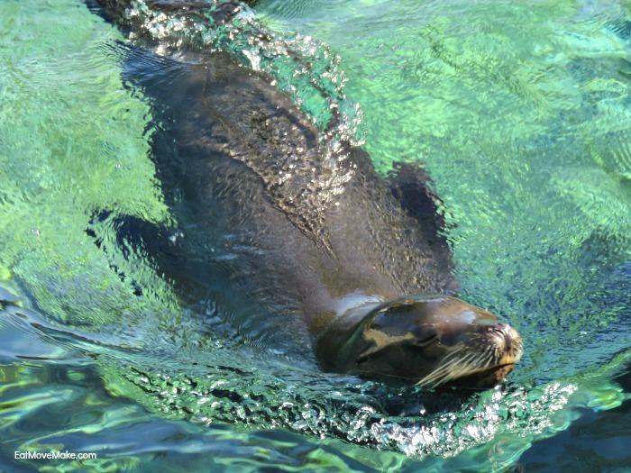 sea lion - Riverbanks Zoo Columbia SC