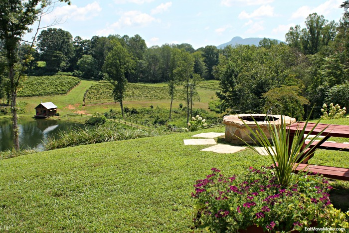 jolo-winery-and-vineyards
