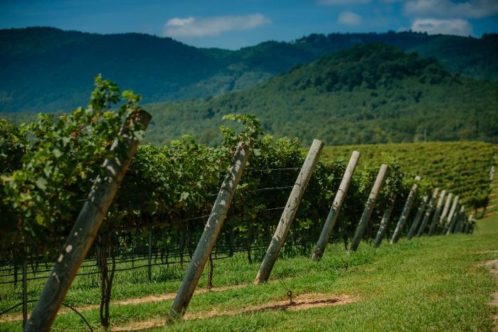 jones-von-drehle-vineyards