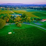 Yadkin Valley Wineries You Need to Visit!