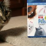 The Secret Life of Pets Family Movie Night