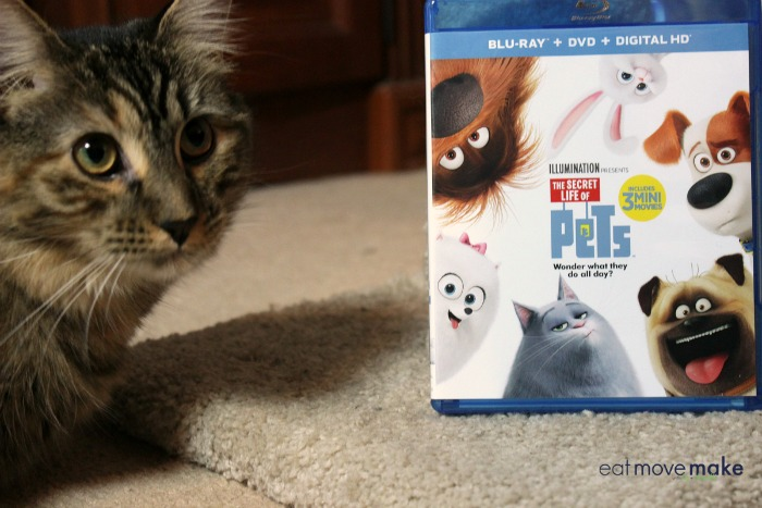 the-secret-life-of-pets-dvd