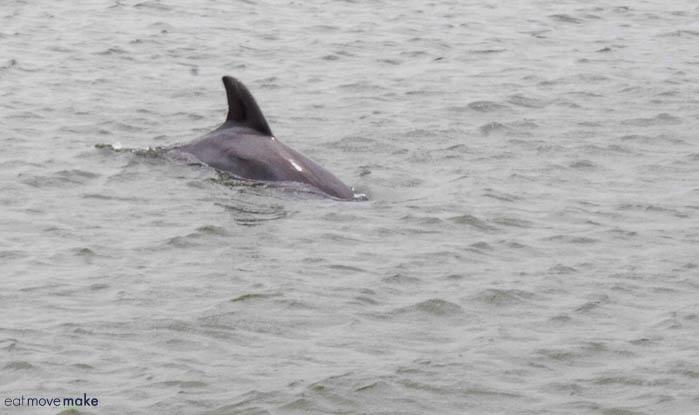 Dolphin Watch Tour Galveston