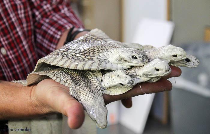 cobra skins