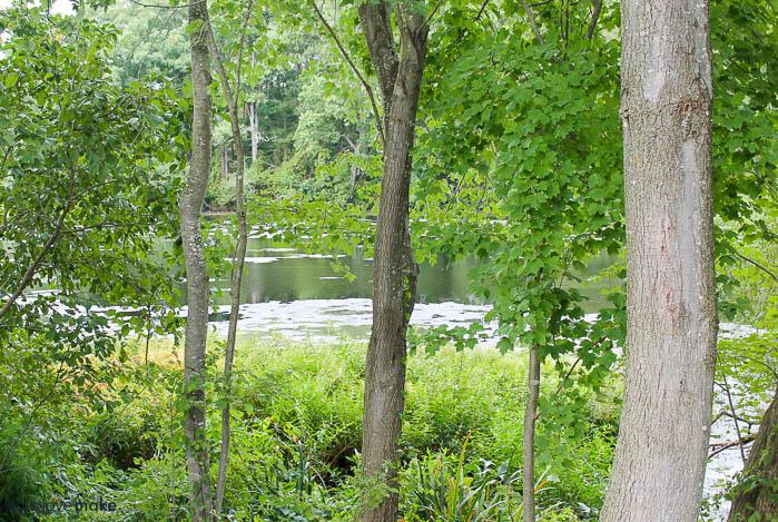 Schumaker Pond at Ward Wildfowl Museum