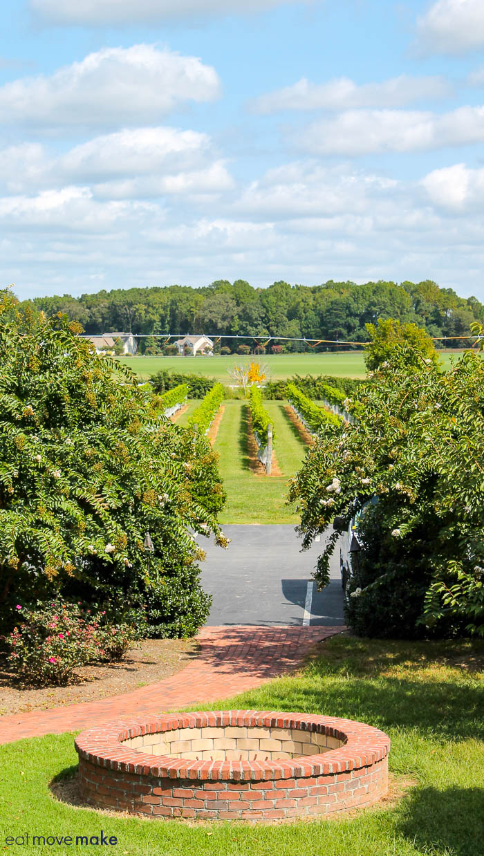 view from Bordeleau winery of vineyards