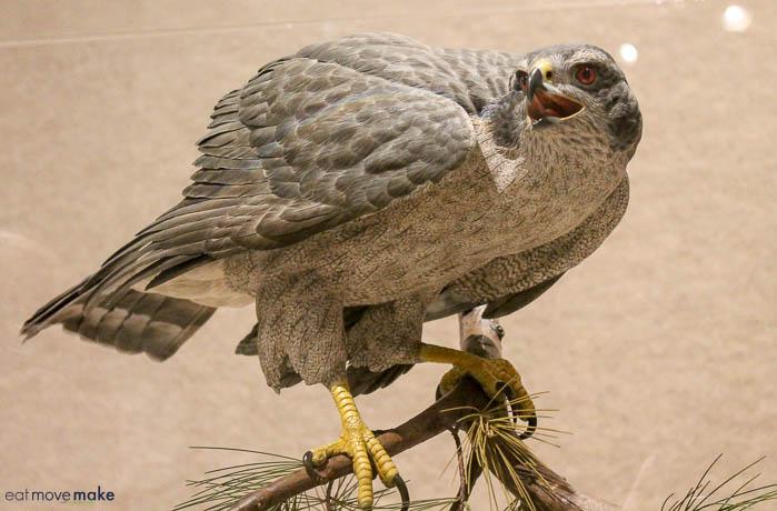 wildfowl art at Ward Museum