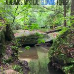Dismals Canyon – Alabama's Mystical Glowing Forest