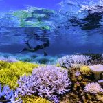 The Coral Reefs Are Dying and It's Our Fault