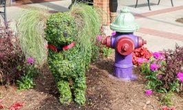 South Carolina Festival of Flowers – Greenwood SC