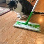 Cat Shedding Problems? #ShedHappens