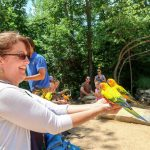 North Carolina Zoo: Insider Secrets and Tips for the Best Visit