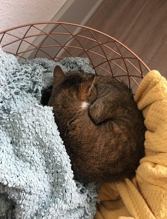 Mony in blanket basket